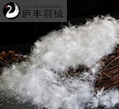 水洗95%白鹅绒